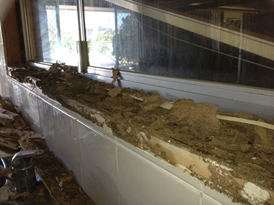 Gold Coast Tweed Coast Termite Damage Repairs